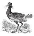 Great Bustard vintage engraving vector image vector image