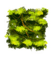 green cartoon lush tropical bush on white vector image vector image