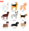 dog breeds cartoon icon vector image vector image