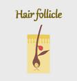 human organ icon in flat style hair follicles vector image