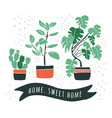 set cute flowers in vases house plants vector image vector image