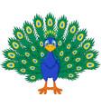 cartoon beautiful peacock vector image vector image