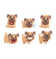 flat set of pug with different emotions vector image vector image
