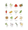 culinary spices and herb for your menu or kitchen vector image