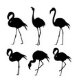 flamingo animal bird cartoon character vector image