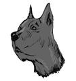 Great Dane dog vector image