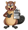 beaver holding construction notepad on white vector image vector image