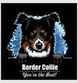 border collie - peeking dogs - breed face head vector image vector image