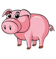 cute pig on white background vector image
