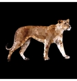 low poly lioness vector image vector image