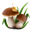 porcini mushrooms vector image vector image