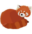 red panda cartoon style vector image vector image