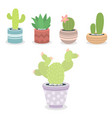 cactus green plant cactaceous home nature cacti vector image vector image