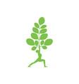 moringa and yoga logo vector image vector image