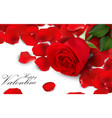 red roses and rose petals on white background vector image vector image