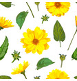 seamless pattern with chrysanthemums flowers vector image vector image