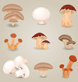 Collection of isolated edible mushrooms for your vector image vector image