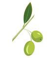 green olives or color vector image vector image