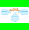 oop turtle on whales vector image vector image