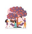 apple harvest concept for web banner vector image