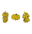 banana fruit sketch for vector image vector image