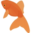 Carassius auratus Gold Fish isolated on white vector image