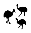 Cassowary bird silhouettes vector image vector image
