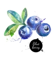 Hand drawn watercolor painting blueberry on white vector image vector image