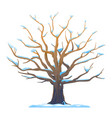 oak tree in winter isolated vector image vector image