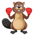 beaver with boxing gloves on white background vector image vector image