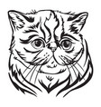 decorative portrait of exotic shorthair cat vector image