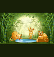 lion in bamboo forest vector image vector image