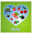 berries heart vector image vector image