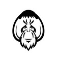 head an adult male orangutan with distinctive vector image vector image