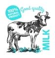 Sketch of cow vector image