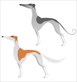 Two isolated elegant greyhounds vector image vector image