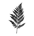 fern leaf silhouette on white background vector image vector image