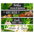 spices and herbs natural cooking seasonings vector image vector image