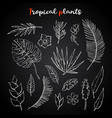 tropical plants setcollection on a chalk vector image