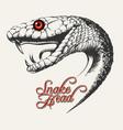 snake head vector image