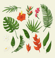 tropical flowers and leaves object set vector image vector image