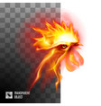 fiery rooster head on transparent background vector image vector image