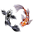 two koi carps with red and black spots vector image