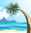 Palm on the beach vector image
