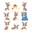 set of funny puppy vector image vector image