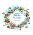 seashells sea shells and conches summer paradise vector image vector image