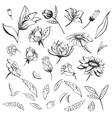 Sketch Flowers Set vector image
