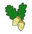 comic cartoon acorns vector image