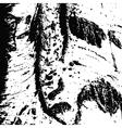poplar bark vector image vector image