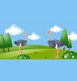 two ostriches in the park vector image